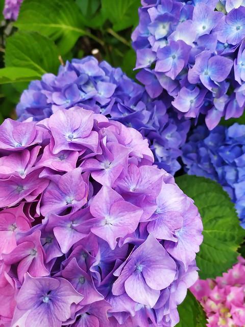 Bleu et mauve