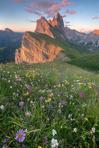 Flowers in bloom Seceda | by Palnick