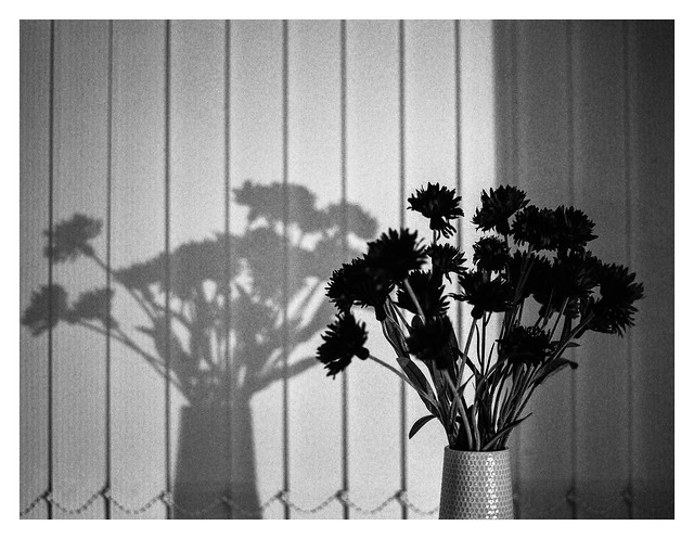 Shadow flowers
