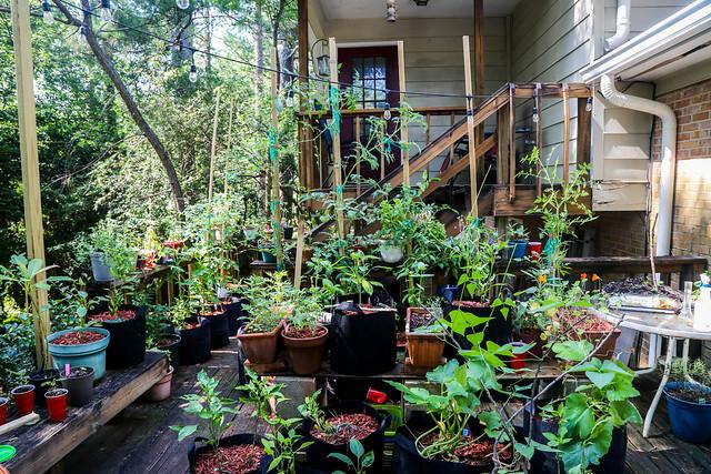 My Lil' Container Garden - Summer Garden 2020 7.10.2020_garden.06