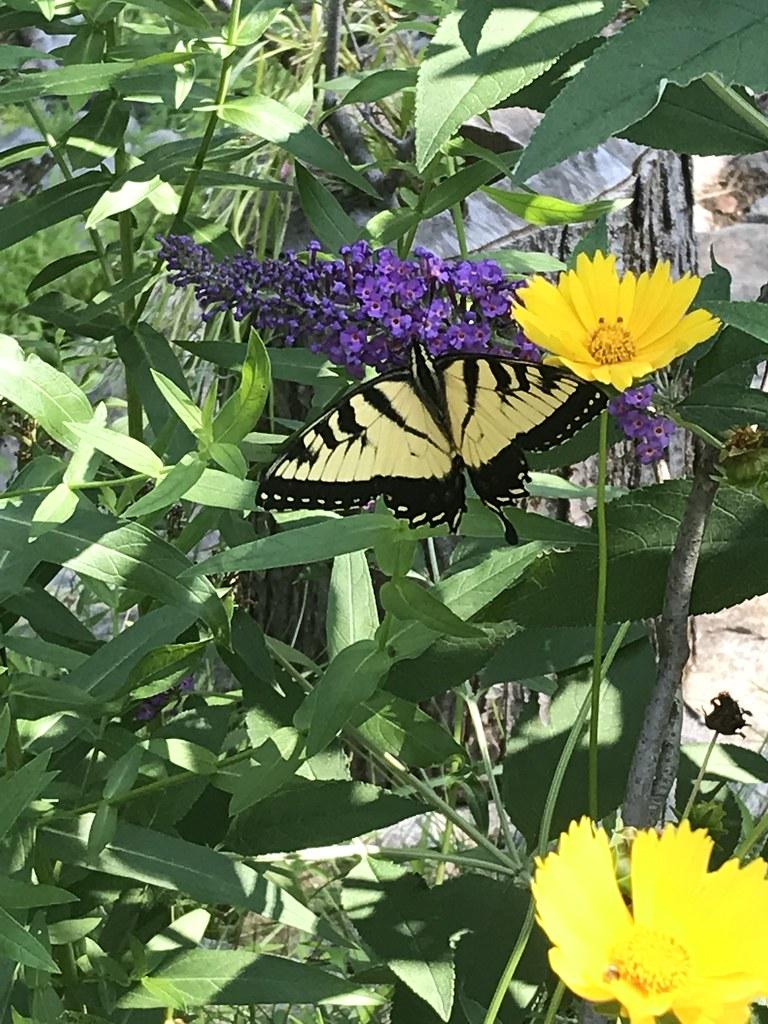 My Pollinators - My Story!