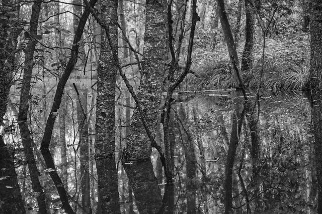 raakmoor birke ii