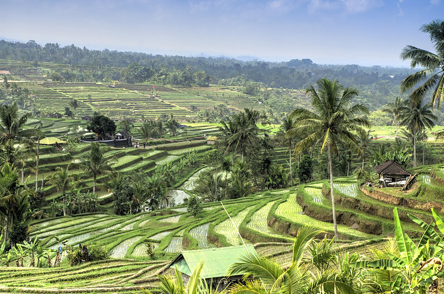 *Bali for the Morning