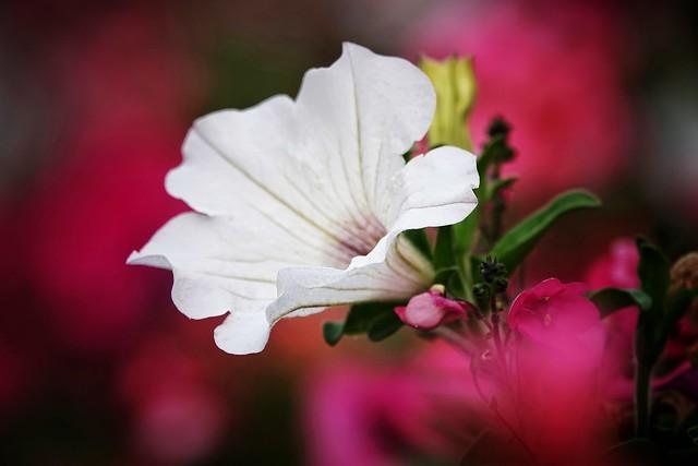 Flower art!