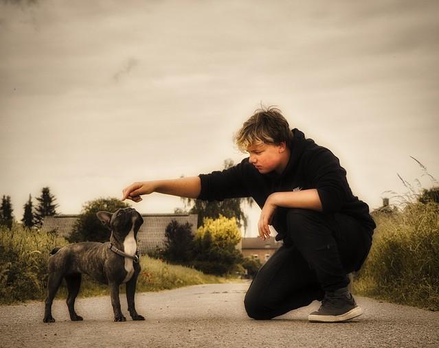The dog trainer - Der Hundetrainer