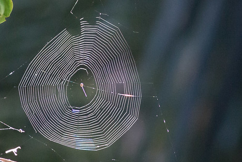 Spider Web | by steve happ