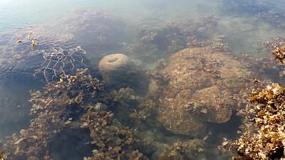 Living reefs of Terumbu Hantu, Jul 2020