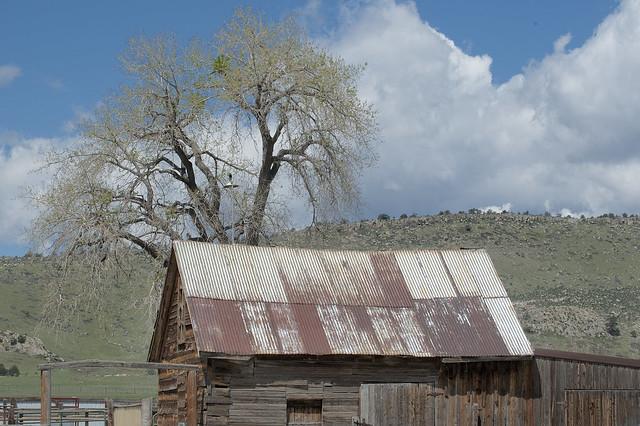 Rocky Rabbit, rustc ranch