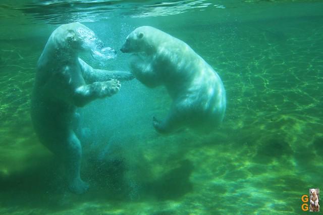 1 Eigene Bilder Zoo Rostock 18.07.20 (98)