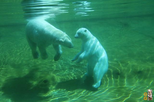 1 Eigene Bilder Zoo Rostock 18.07.20 (73)