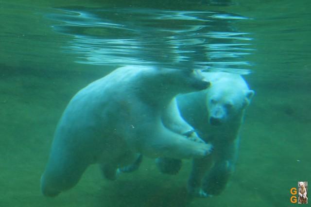 1 Eigene Bilder Zoo Rostock 18.07.20 (50)