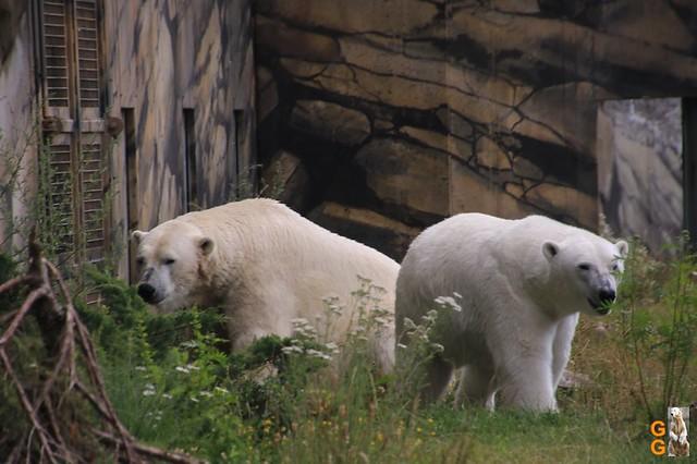 1 Eigene Bilder Zoo Rostock 18.07.20 (30)