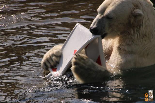 1 Eigene Bilder Zoo Rostock 18.07.20 (12)