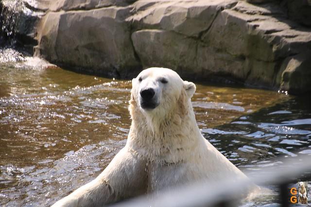 1 Eigene Bilder Zoo Rostock 18.07.20 (3)