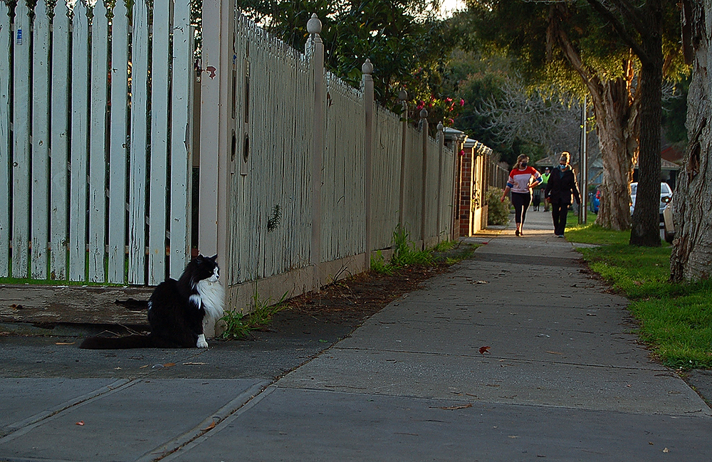 _unknown_cat_2_
