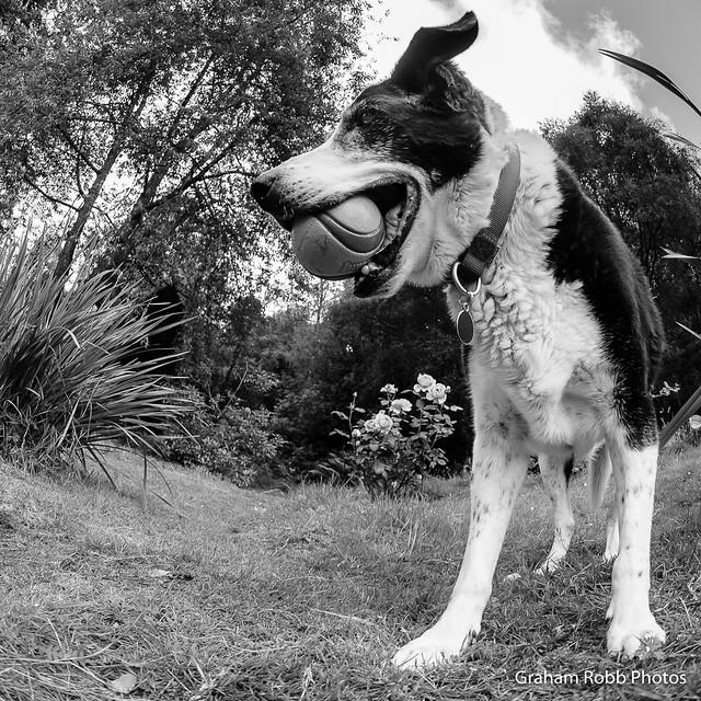 mono Zac & his ball