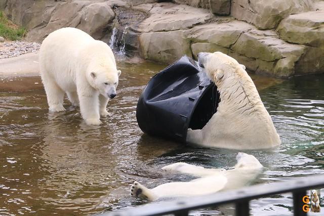 Eigene Bilder Zoo Rostock 19.07.20 Wasserzeichen (135)