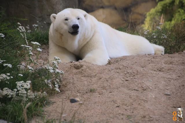 1 Eigene Bilder Zoo Rostock 18.07.20 (143)