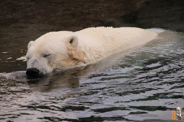 1 Eigene Bilder Zoo Rostock 18.07.20 (127)