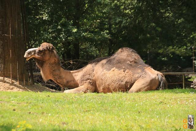 1 Eigene Bilder Zoo Rostock 18.07.20 (112)