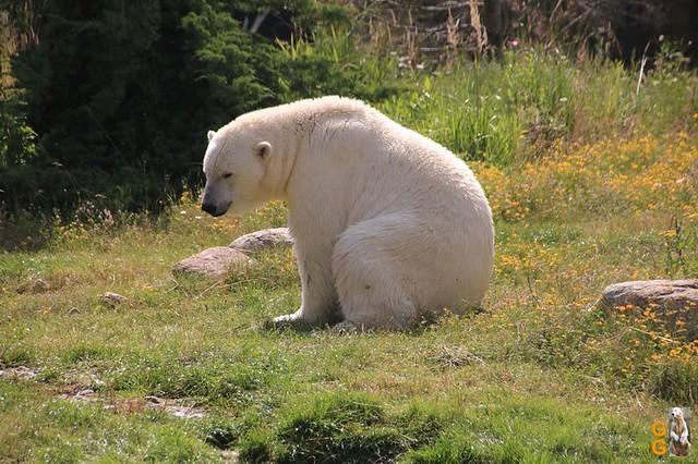 1 Eigene Bilder Zoo Rostock 18.07.20 (5)