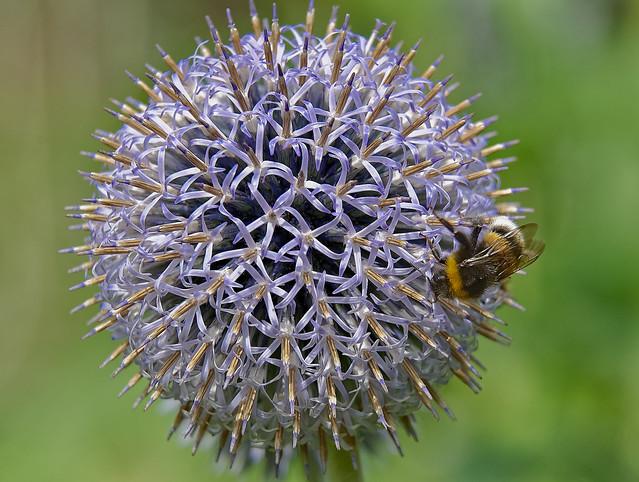 Un monde bourdonnant - A buzzing world