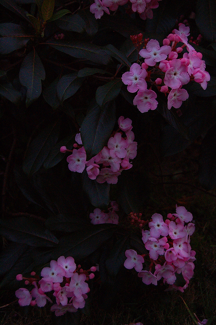 _flowers_2_