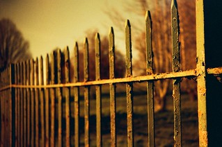 Fence in redscale