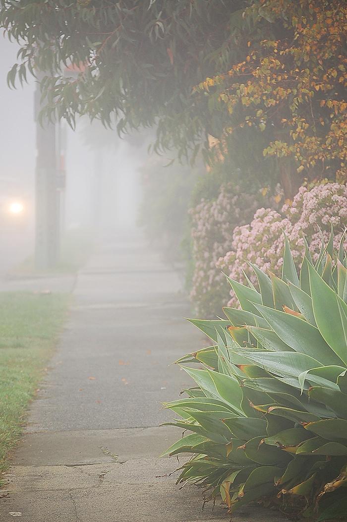 _fog_3_