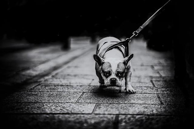 Doggy..