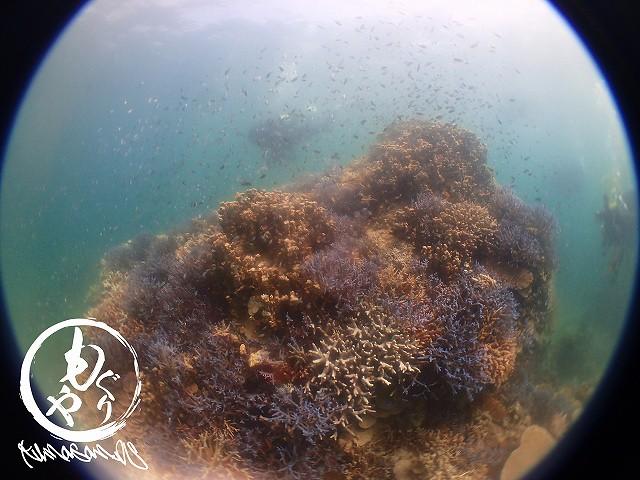 本日ももりもり極上珊瑚に癒されました♪♪