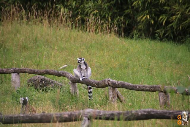 1 Eigene Bilder Zoo Rostock 18.07.20 (119)