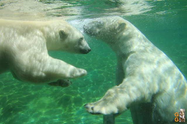 1 Eigene Bilder Zoo Rostock 18.07.20 (103)