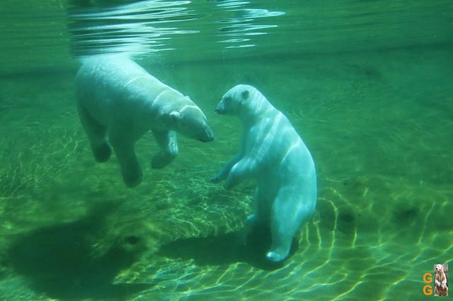 1 Eigene Bilder Zoo Rostock 18.07.20 (72)