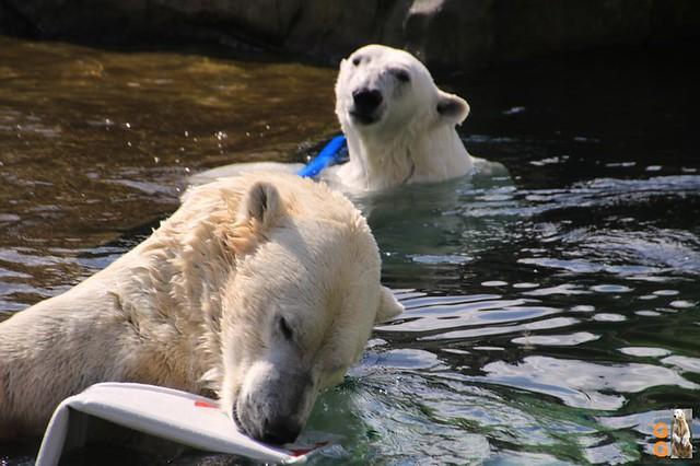 1 Eigene Bilder Zoo Rostock 18.07.20 (15)