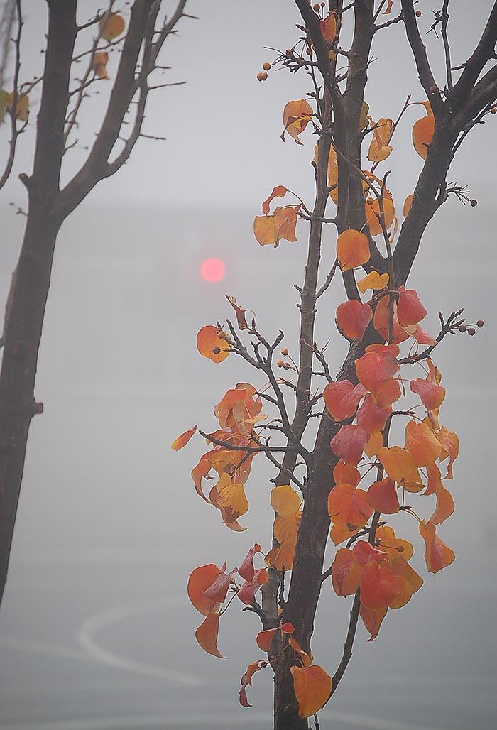 _fog_1_