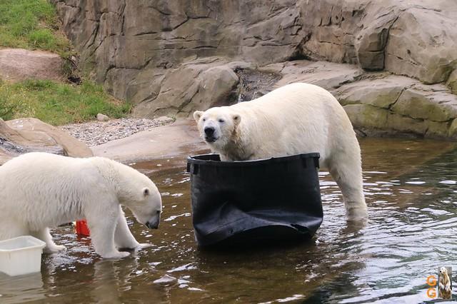 Eigene Bilder Zoo Rostock 19.07.20 Wasserzeichen (141)