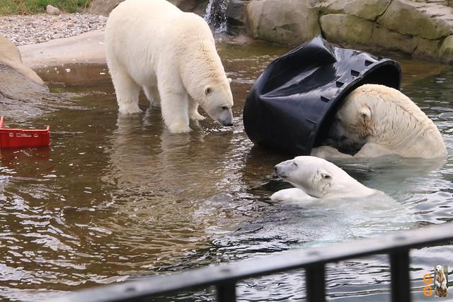 Eigene Bilder Zoo Rostock 19.07.20 Wasserzeichen (136)