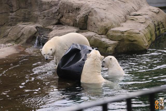 Eigene Bilder Zoo Rostock 19.07.20 Wasserzeichen (125)