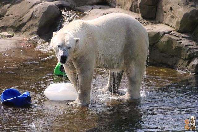 Eigene Bilder Zoo Rostock 19.07.20 Wasserzeichen (11)