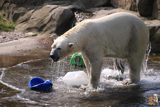 Eigene Bilder Zoo Rostock 19.07.20 Wasserzeichen (10)