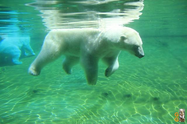 Eigene Bilder Zoo Rostock 19.07.20 Wasserzeichen (113)