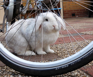 """Me thinks there's a few spokes missing, Mommy."""