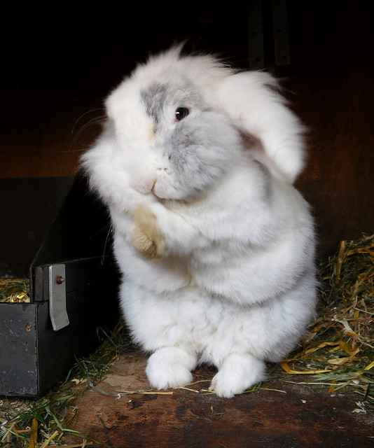 Clap your paws, everybunny!