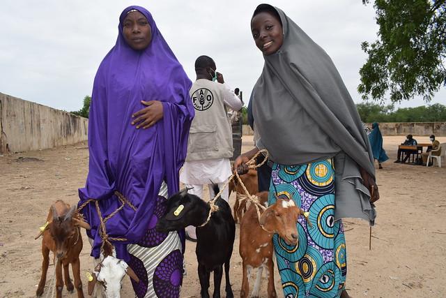Northeastern Nigeria | Rebuilding livelihoods in Borno State