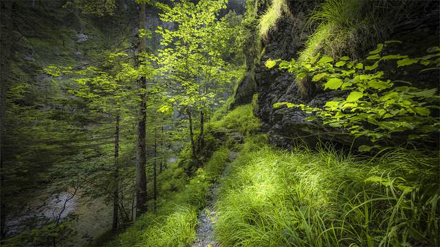 _DSC8008 Hiking trail through the Klausgraben Gorge, Salza river - Styria / Austria
