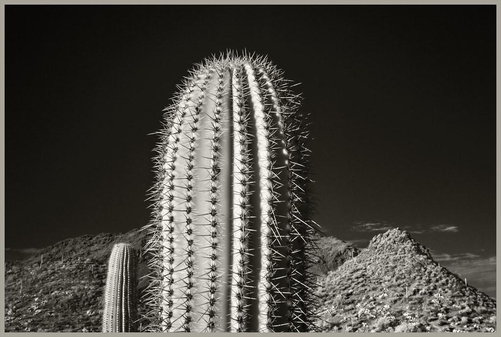 Gates Pass IR #24 2020; Saguaros & Peaks