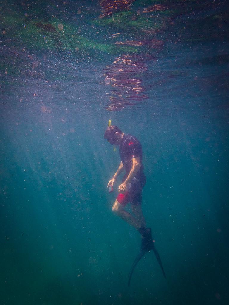 Freediver at Gordons Bay