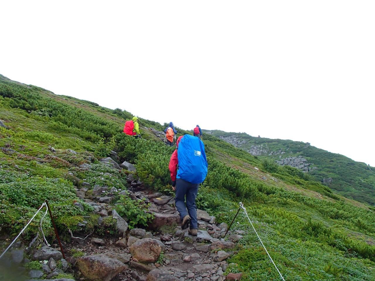 北海道・ニペソツ山登山 森林限界を超える