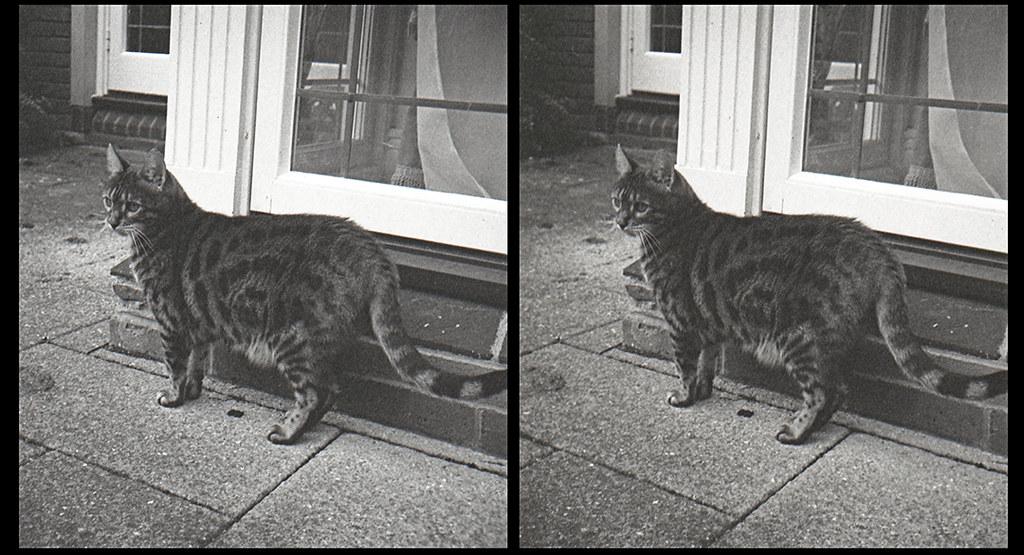 Catsin3D12